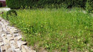 Eines von vielen Bienenparadiesen im Dorf - hier vor dem Haus von Marina und Christoph Lakemeyer